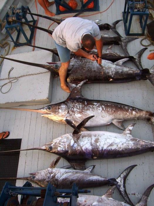 pesca grande