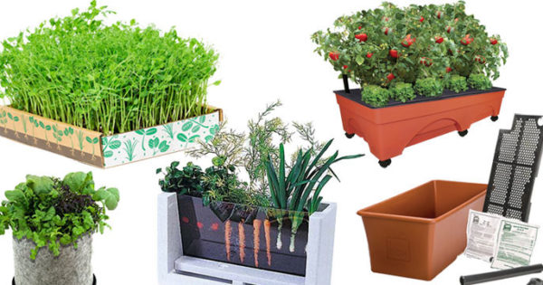 Top 5 Best Veggie Container Kits