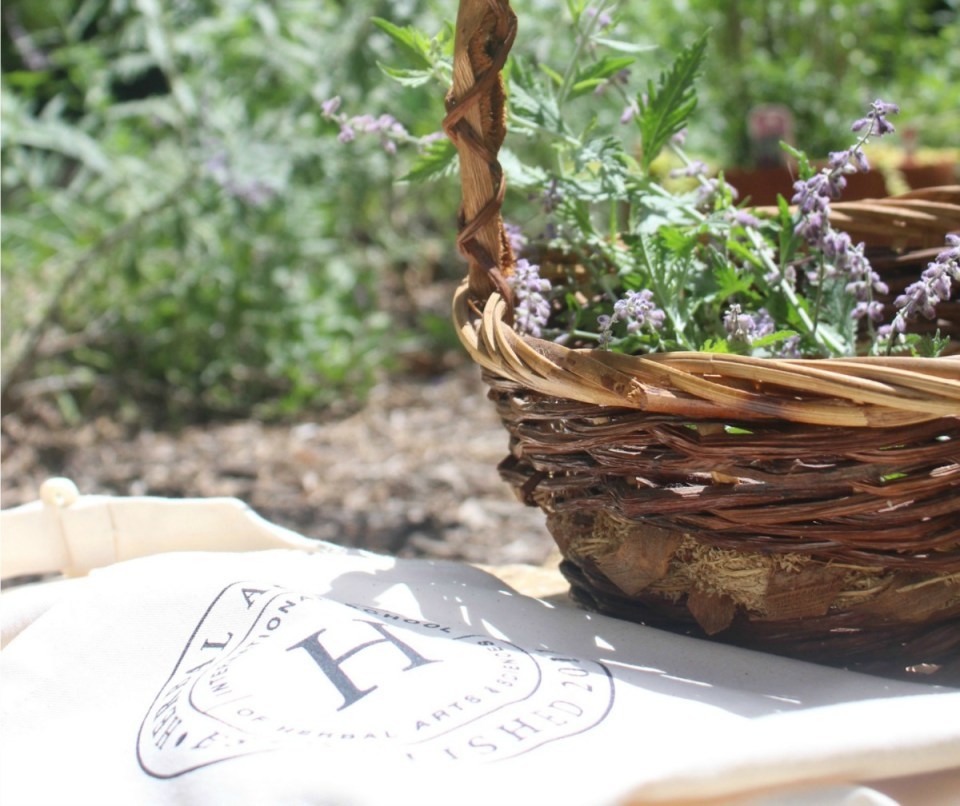 Herbal Q&A: 5 Herbal Academy Team Members Share Their Herbal Advice | Herbal Academy |Have you ever wanted to sit down with a group of herbalists and pick their brains? Today we have Herbal Academy team members sharing herbal advice with