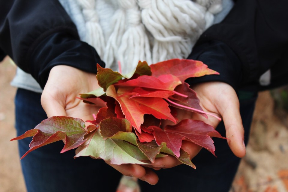 3 Tips on Managing Vata Dosha During Autumn | Herbal Academy | As fall approaches, here are three tips that those with a predominant vata dosha can follow to maintain balance.