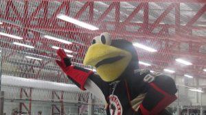 hockey mascot interview