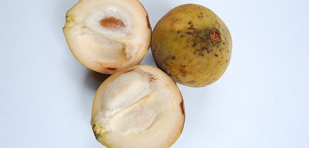 Santol, one of the amazing, weird and exotic fruits of Southeast Asia