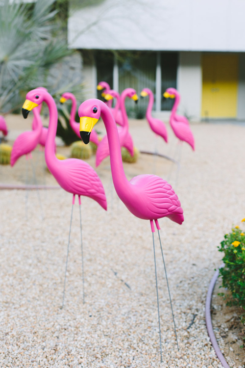 pink flamingos in the lawn