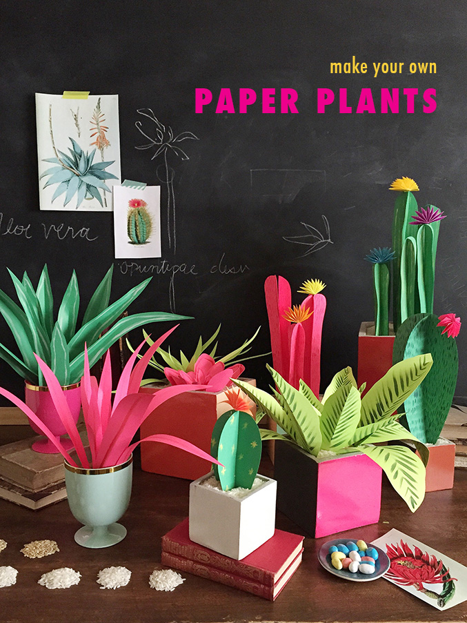 The Basic Parts of a Plant (5 Paragraph Essay)