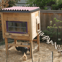 Raising Backyard Chickens for Dummies