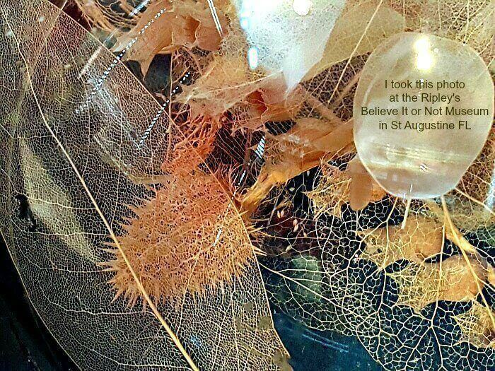 Skeletal-Leaves-Craft-Project-museum-photo