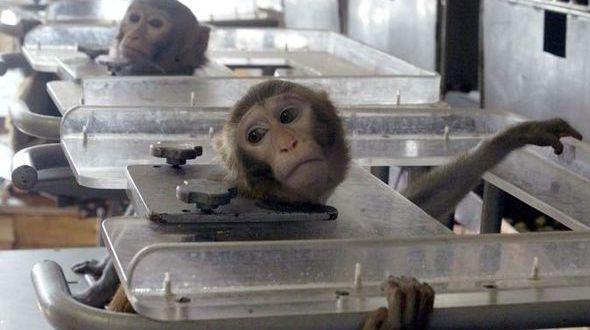 Animal_testing-458546