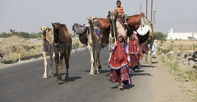 gadaria-women-and-child-travelling-with-their-camels-dh4rth