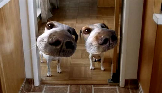 Olympus Distorted Dogs