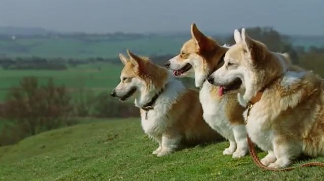 Freeview HD Corgis