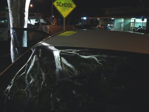 Tree Reflected on Car