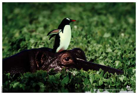 Penguin rides a crocodile in global warming print advertisement