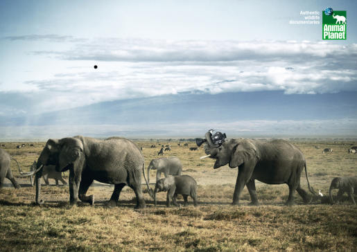 Animal Planet elephants with camera