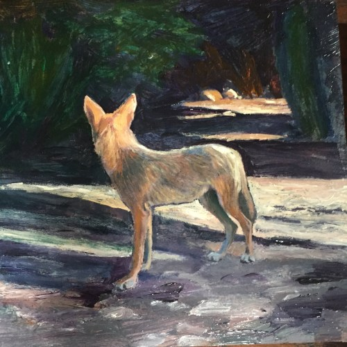 animals-coyote-art-1