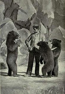 Performing-black-bears