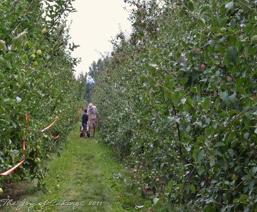 apples 012