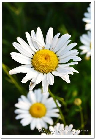 flowers 019color