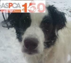 ASPCA 150th Anniversary + A Giveaway!
