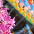 Flower blossoms at the Celebrate Spring Festival