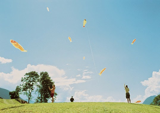 Kites Flying in The Sky Appear