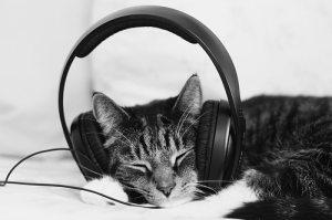 cat-headphones
