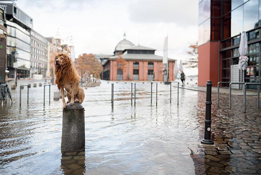 dog-turned-into-lion-julia-marie-werner-16