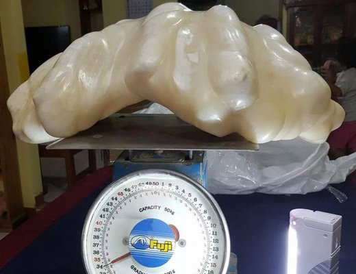 A fisherman in the Philippines has been hiding the world's largest pearl for over a decade, not knowing its $100 million worth. A fisherman in the Philippines is happy to learn that the pearl he hid unfer his bed for 10 years is worth up to $100 million. Weighing 34-Kilogram, the world's largest pearl was discovered by accident. Some ten years ago, the unidentified fisherman got his anchor stuck in the seas just off Palawan Island in the Philippines. When the man dove down to free his fishing boat, he was surprised to find his anchor stuck to calm rather than a rock, and decided to take the massive clam up with him. Not knowing its value, the fisherman decided to keep the pearl under his bed for good luck, and did so for 10 full years. It was only after a fire erupted in his home when he was forced to remove it. Since it is heavy, he decided to keep it as his aunts for safekeeping when he moved to another part of the province, luckily, his aunt is a local tourism officer. The pearl was produced by a native giant clam, a species of clams that can reach up to over a meter in length and weigh over 200 kilograms. However, they rarely produce pearls. The title holder for world's largest pearl before this one was also found off Palawan back in 1943. The $35-million Pearl of Allah weighs 6.4 kilograms.