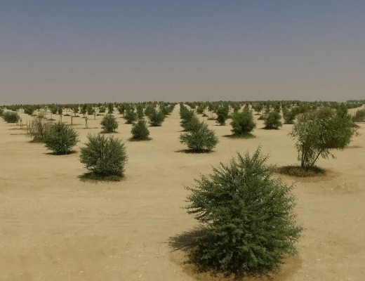 Qatar Gets A Forest.png