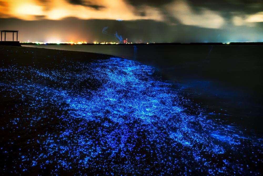 Sea of Stars, Maldives