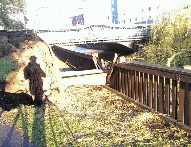 A tree downed by the wind on the river footpath near Firth Road. Photo: Jan van der Lubbe