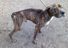 Reuben was found wandering in the Arboretum. Photo: Lincolnshire Rescue Kennels