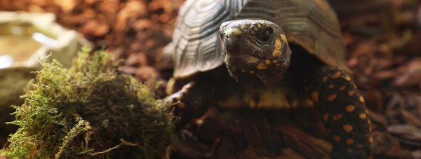 Can you name the tortoise?