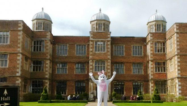 doddington-white-rabbit-2-web_658_375_84_c1_c_c_0_0_1