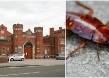 Lincoln prison cockroaches Collage