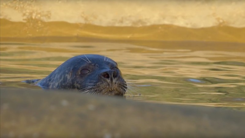 Photo: Mablethorpe seal sanctuary and wildlife centre video screenshot