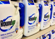 The council has said that there is no scientific evidence that states glyphosate presents unacceptable risks to people or the environment. Photo: Mike Mozart