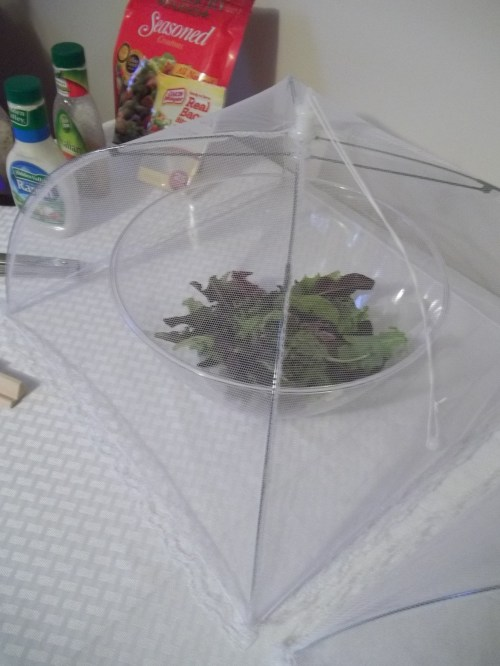 Mesh food covers keep bugs and cat hair off your food!   ||  thelittledabbler.com