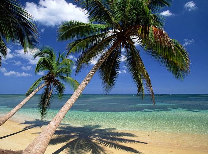 Coconuts galore!
