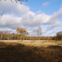 Neolithic Trackway through Epping Forest - walk to Cheshunt
