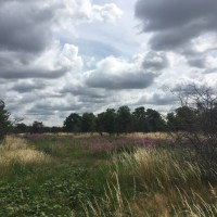 Sunday Walk - Wanstead Flats, North Circular and Hollow Ponds