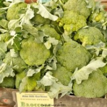 thumbs broccoli University Farmers Market Early Fall 2011