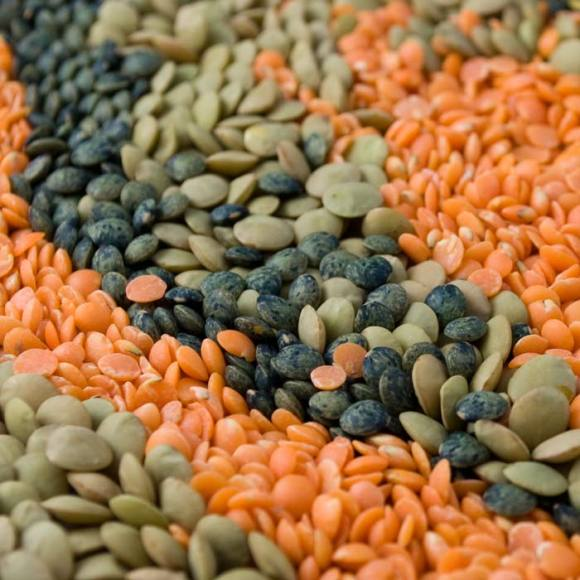 An Array of Northwest Lentils Lentil Primer