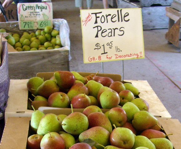 Pears for sale Hood River OR Pear Primer