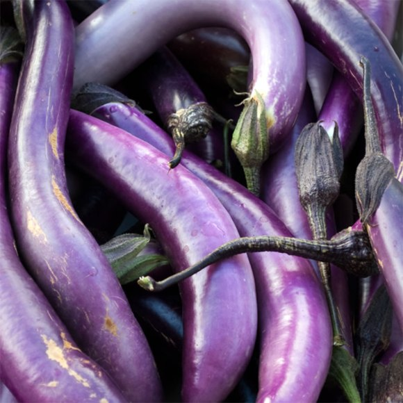 University Farmers Market Eggplant 1 Spicy Eggplant Tomato Sauce