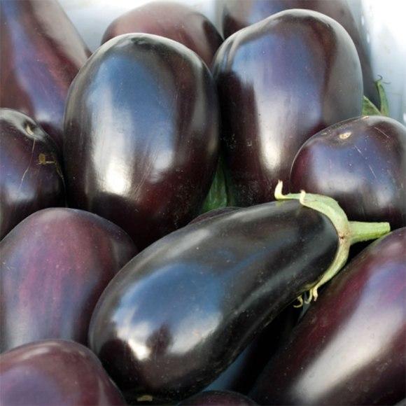 University Farmers Market Eggplant 2 Spicy Eggplant Tomato Sauce