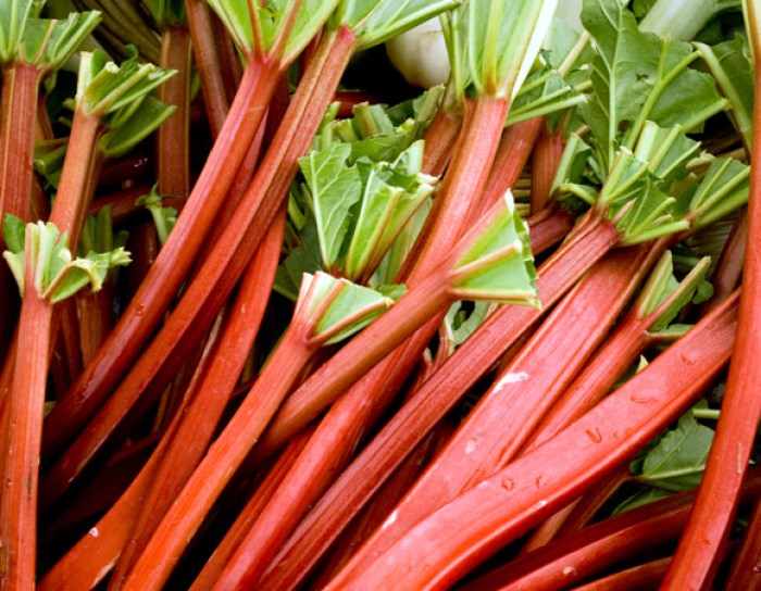 Fresh Rhubarb Roundup: Fresh Rhubarb at Portland Farmers Market