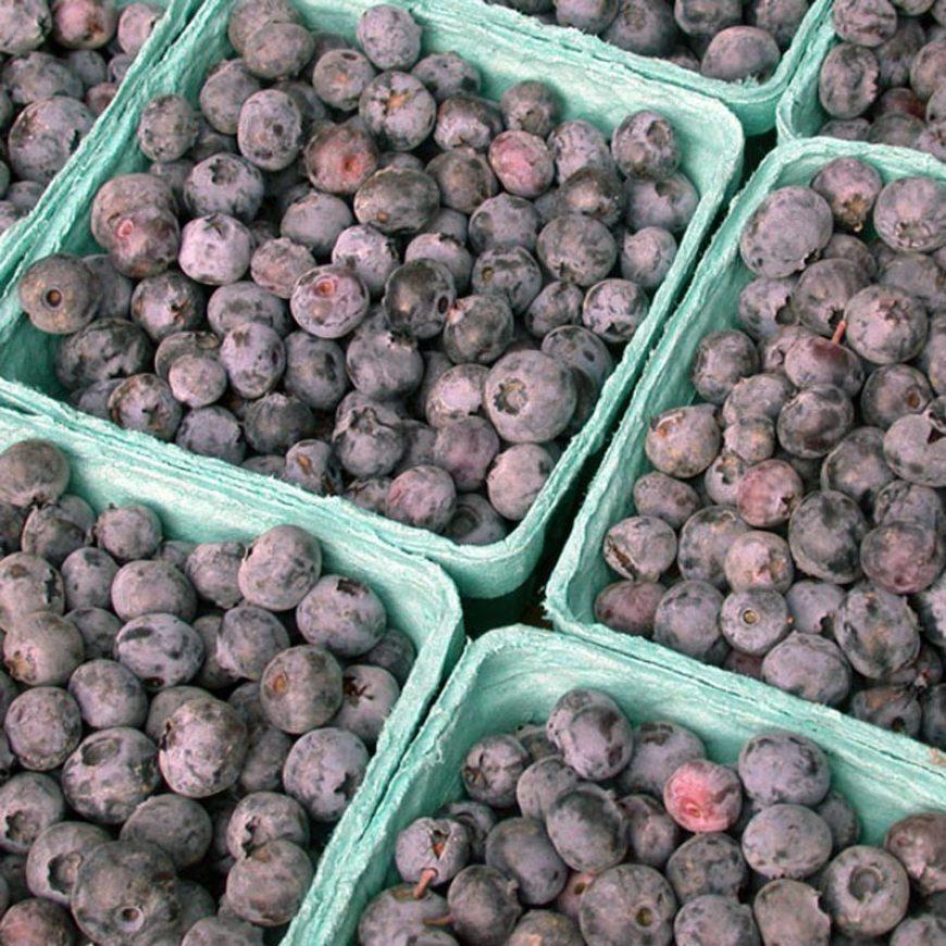Fresh Blueberry Roundup | LunaCafe