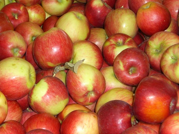 fresh northwest apples3 Apple Primer