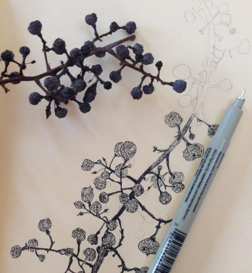 Dried Berries in my Sketchbook