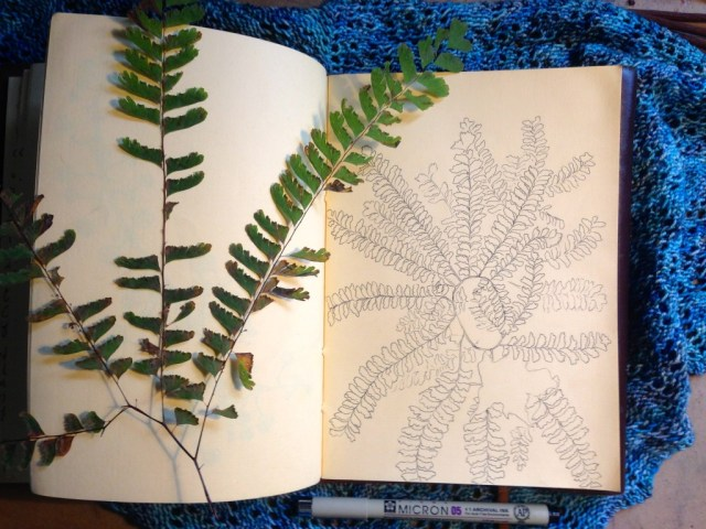 Maidenhair Fern Sketch in my Sketchbook